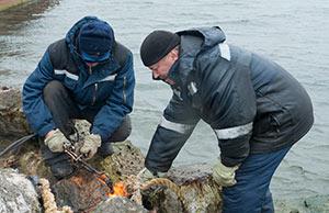 Работники морского торгового порта обезопасят залежку сивучей нате мысе Сигнальный